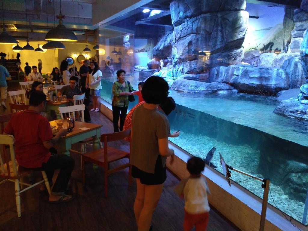 Makan di resto sambil memberi makan pinguin di pengalaman Menyelam Bersama Hiu di Mall Jakarta