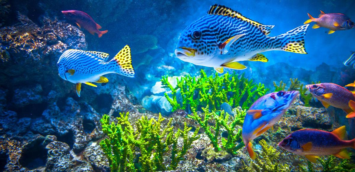 Ikan Ini Menyehatkan Jiwa dan Membawa Keberuntungan